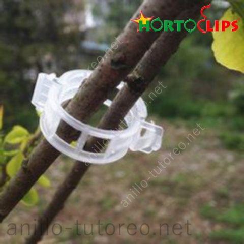 hortoclip Anillo tutor sosteniendo un par de ramas